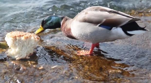 duck-11.jpg